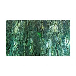 Terarijní pozadí TRIXIE kůra/deštný prales 60x150cm