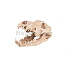 Akvarijní dekorace FLAMINGO - Skelo lebka predátora 24x13x13cm