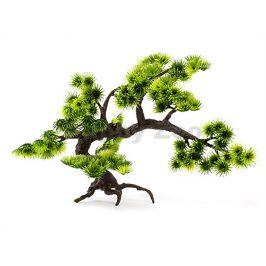 Rostlina JK Bonsai (L) 28cm