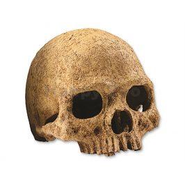 Lidská lebka HAGEN EXO TERRA 15x11,5x10,5cm